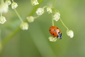 Preparing Home for Spring Pests