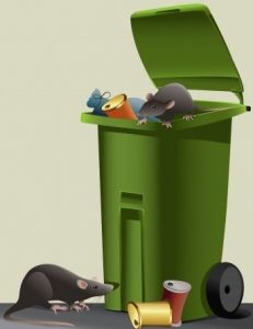Animals in Garbage