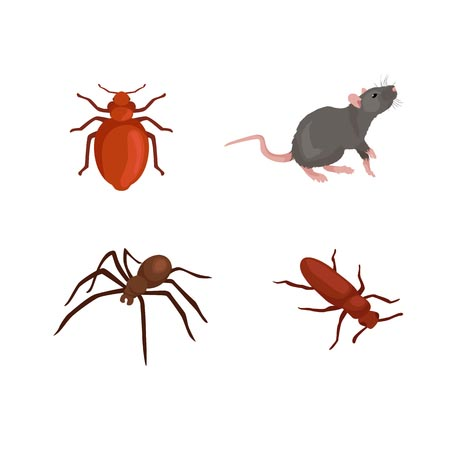 pest extermination in WNY