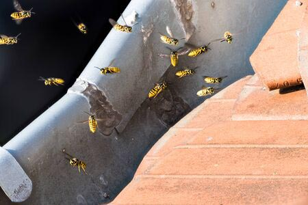 Wasp Extermination in WNY