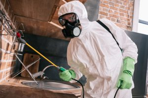 Why You Should Hire a Professional Exterminator