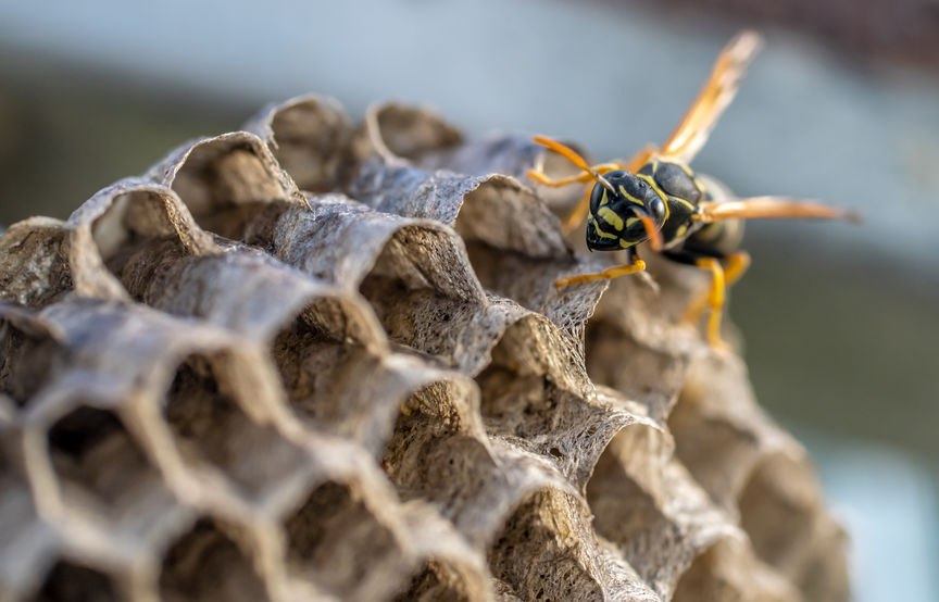 Bee in a Hive